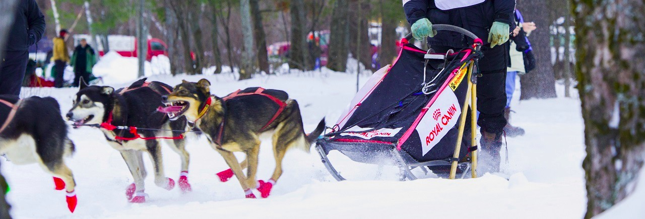 Tahquamenon Country Sled Dog race.