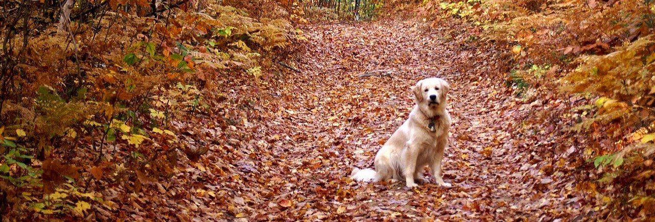 Dog on fall trailWeb