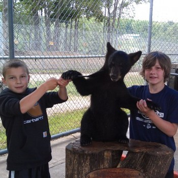 Oswalds Bear Ranch